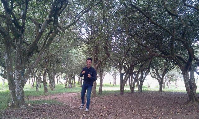 Pohon teh langka