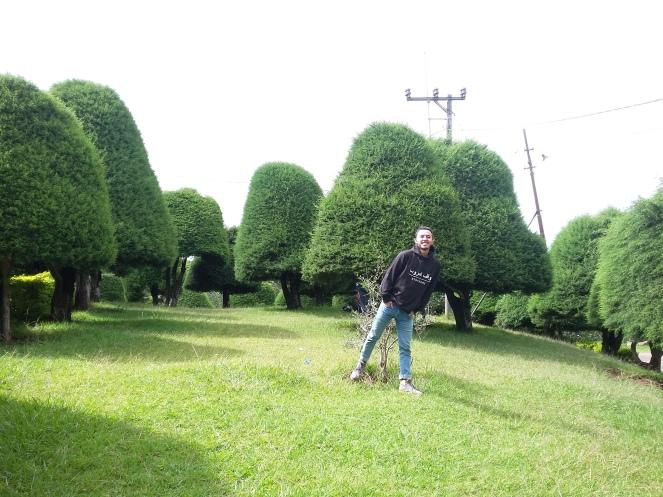 Bukit Jamur Rancabolang Ciwidey